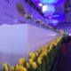 Verdrag van Maastricht gele tulpen