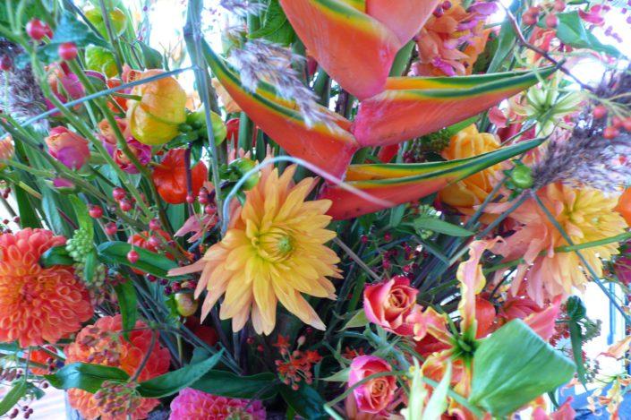 oranje bloemen dahlia nrozen