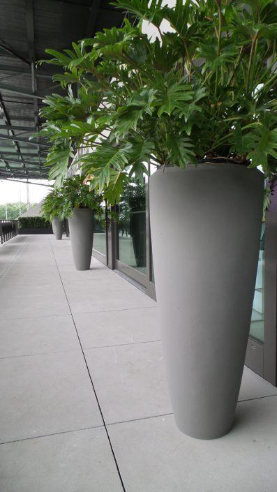 Hoge potten met groene planten