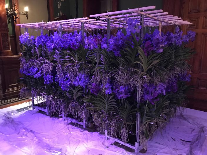 Vanda's gebruikt in de bloemdecoratie bij TEFAF NY