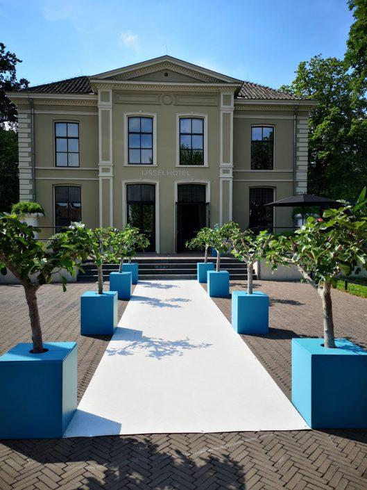 Vijgenbomen en witte loper bij entree IJsselhotel tijdens de haringparty